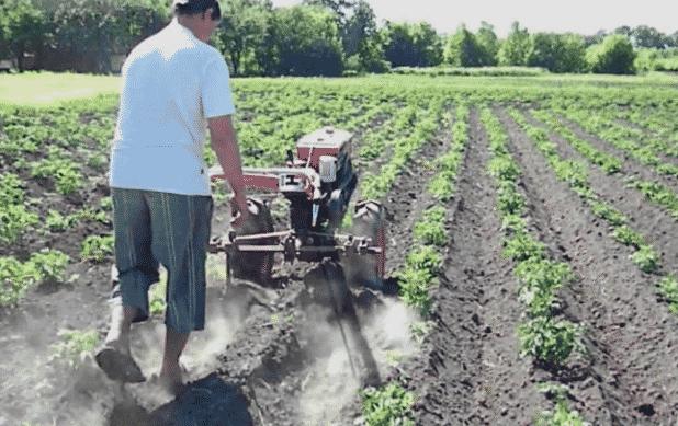 Окучивания картофеля культиватором