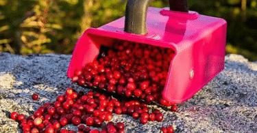 Комбайны для сбора ягод