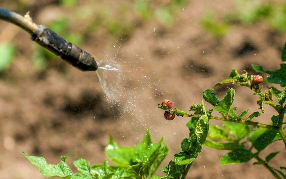 Отрава от колорадского жука