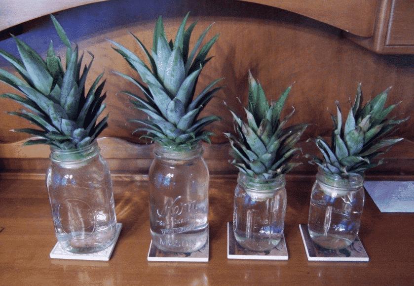 Как вырастить ананас из купленного в магазине