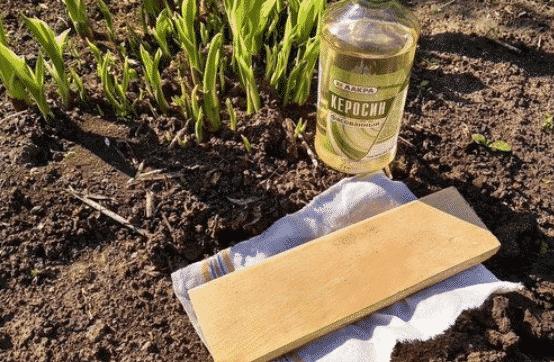 Керосин, солярка - вывести муравьев с огорода навсегда