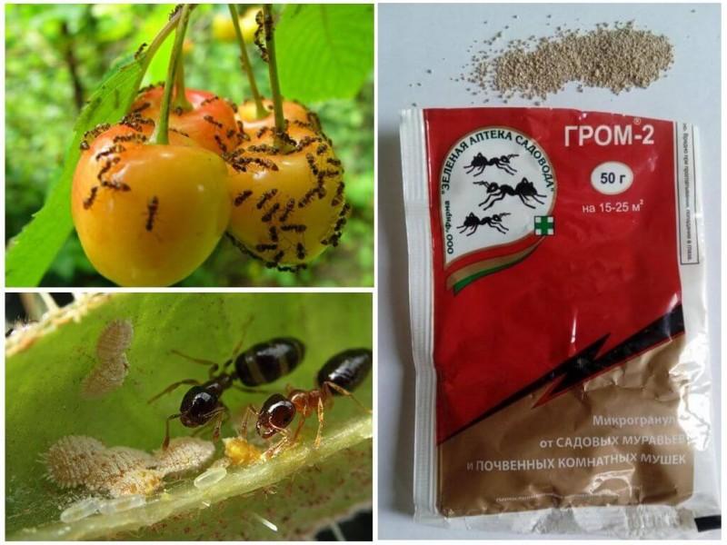 Гром 2 - лучшее средство от муравьев на участке
